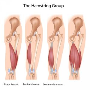 The Hamstring Group