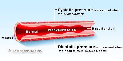 BP Blood Vessel
